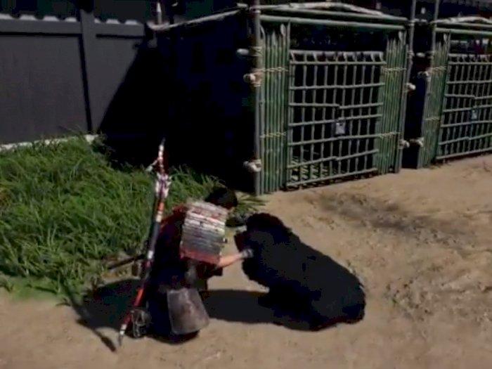 Update Ghost of Tsushima Terbaru Mungkinkan Pemain 'Memelihara' Anjing
