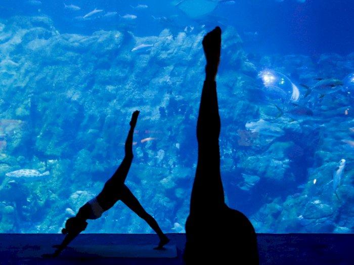 FOTO: Aquarium Yoga, Persembahan Terbaru dari Hong Kong Ocean Park