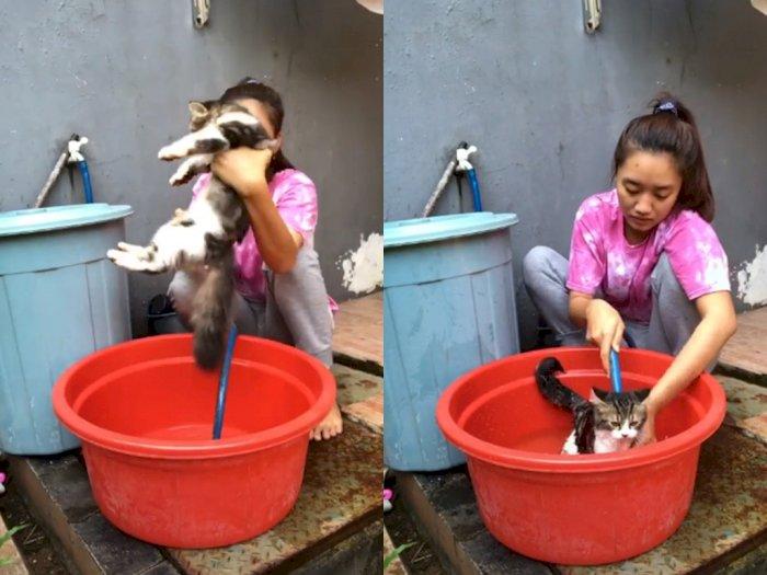 Kucing ini Tetap Santai dan Tak Takut Air Saat Dimandikan, Bikin Netizen Gemas