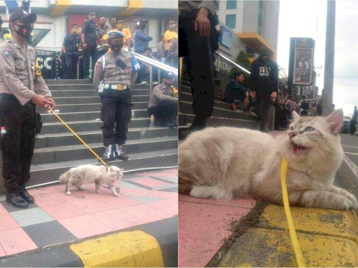 Gemas! Kucing Ini Ikut Amankan Demo RUU Cipta Kerja, Netizen Gak Tahan Pengen Elus
