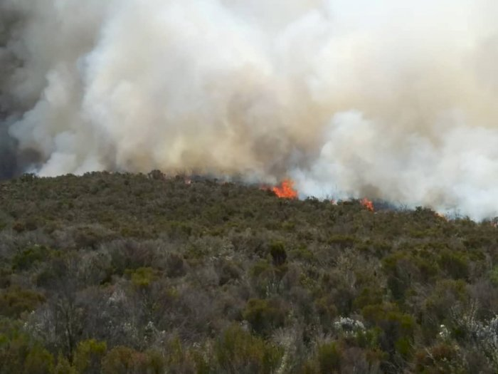 Kebakaran Besar Melanda Gunung Kilimajaro di Afrika
