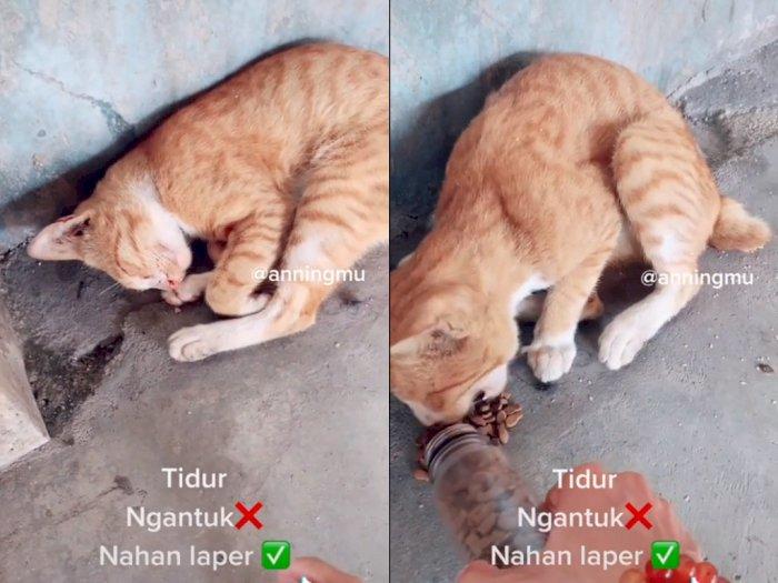 Pria ini Beri Makan Setiap Kali Ketemu dengan Kucing Liar, Bikin Netizen Kagum