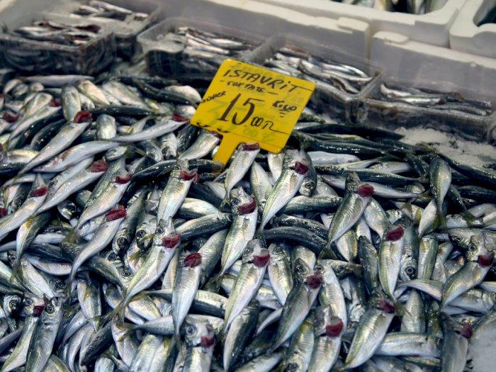 4 Manfaat Ikan Tenggiri untuk Kesehatan yang Harus Kamu Ketahui