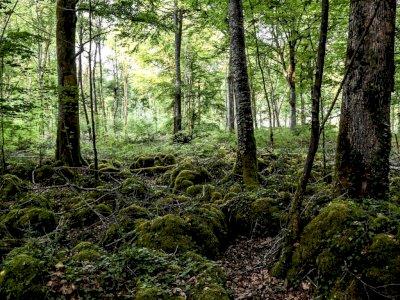 Prancis Buka Taman Nasional Seluas 250.000 Hektar, Dipenuhi Pepohonan Kuno & Bunga Langka