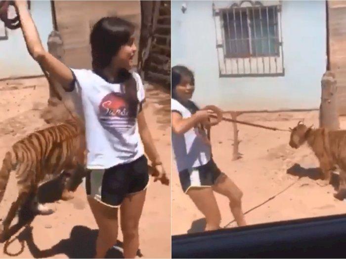 Greget! Gadis Ini Ajak Harimau Berjalan-jalan, Diperlakukan Bagai Kucing Oren