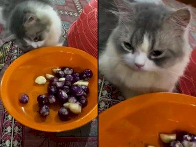 Kucing ini Keluarkan Air Mata Saat Liat Majikannya Kupas Bawang, Bikin Netizen Gemas