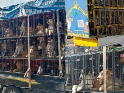 Viral Puluhan Anjing Dikirim ke Medan untuk Dimakan, Pecinta Hewan Ungkap Hal Mengejutkan