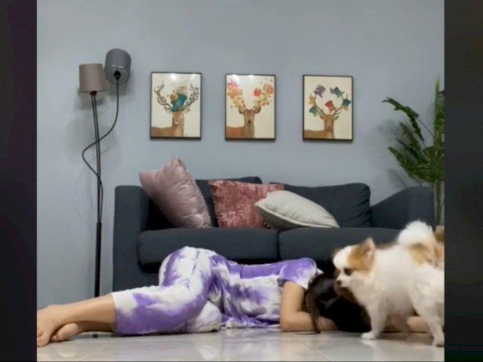 Viral Cewek Prank Anjing Kesayangan dengan Pura-pura Pingsan, Reaksi Anjingnya Gemas