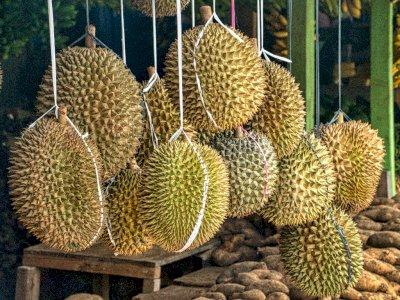 Punya Bau yang Kuat, Ini Manfaat Durian yang Harus Kamu Ketahui