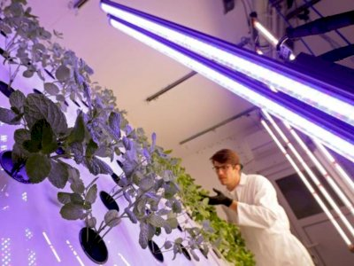 Bereksperimen, Ilmuwan Ceko Ini Tanam Sawi untuk Jadikan Planet Mars Layak Huni