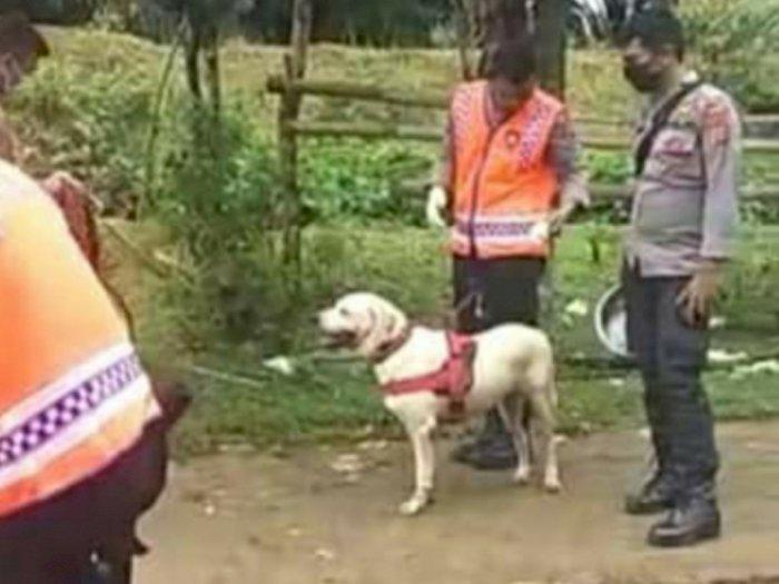 Anjing Pelacak yang Diturunkan Masih Belum Temukan 3 Anak yang Hilang di Langkat