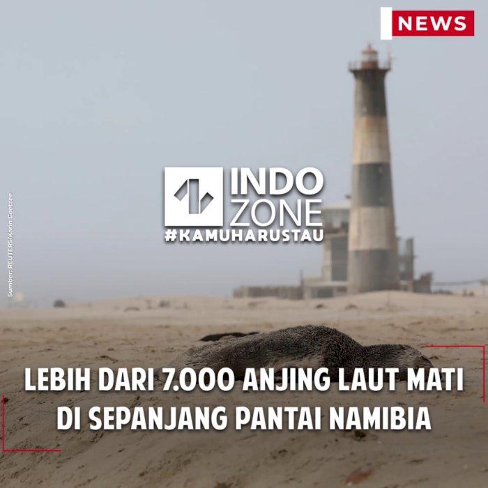 Lebih dari 7.000 Anjing Laut Mati di Sepanjang Pantai Namibia
