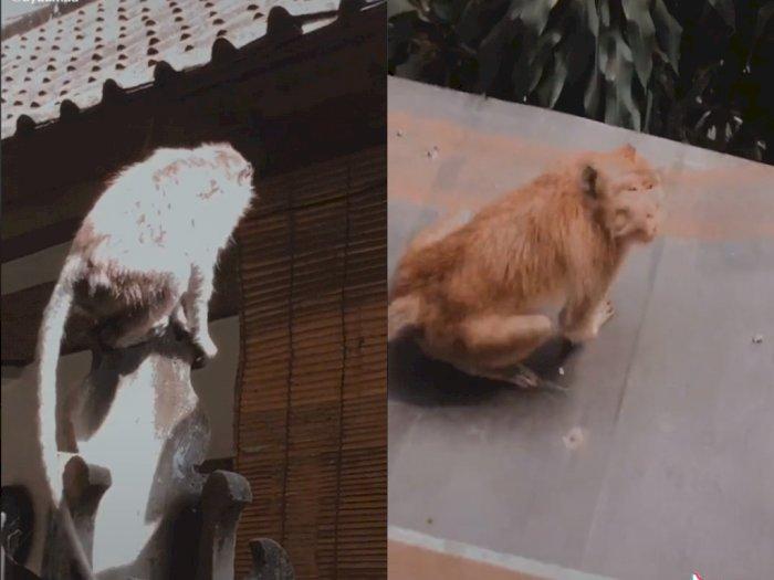 Duh! Gegara Dekat dengan Tempat Wisata, Rumah Cewek ini Sering Didatangi Monyet