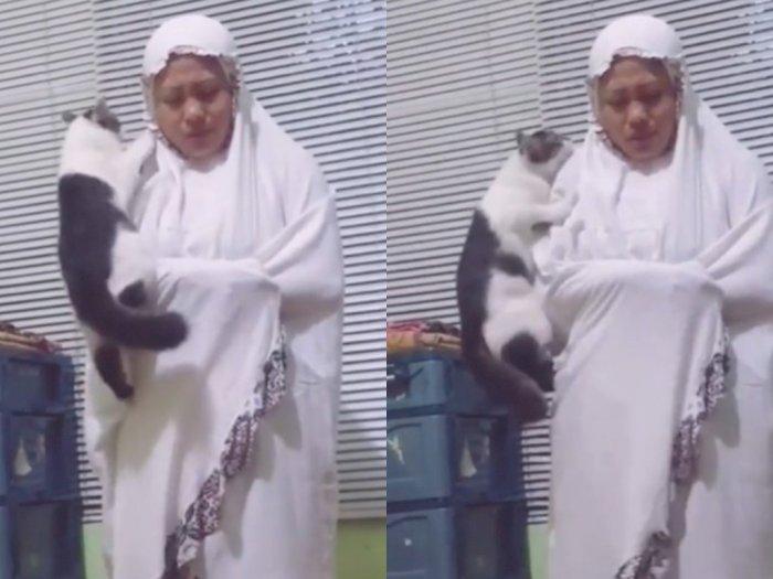 Dipanjati Kucing saat Salat, Wanita Ini Tetap Berusaha Khusyuk, Ekspresinya Jadi Sorotan