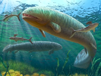 Rhizodus Hibberti, Ikan Air Tawar yang Hidup Pada Periode Karbon