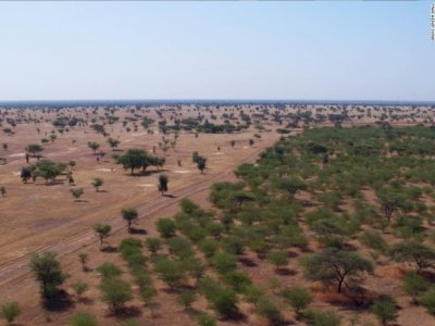 Perangi Krisis Ekologi, Afrika Sedang Bangun Tembok Hijau Besar, Capai 8000 Km