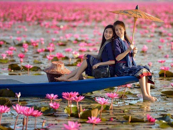Pesona Danau Pink Water Lilies di Thailand, Menakjubkan!