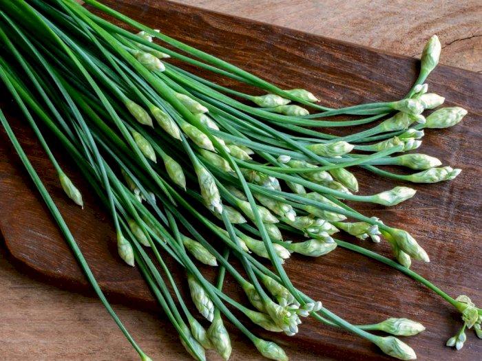 Daun Kucai, Sayuran Penyedap dari Asia Timur yang Baik untuk Kesehatan