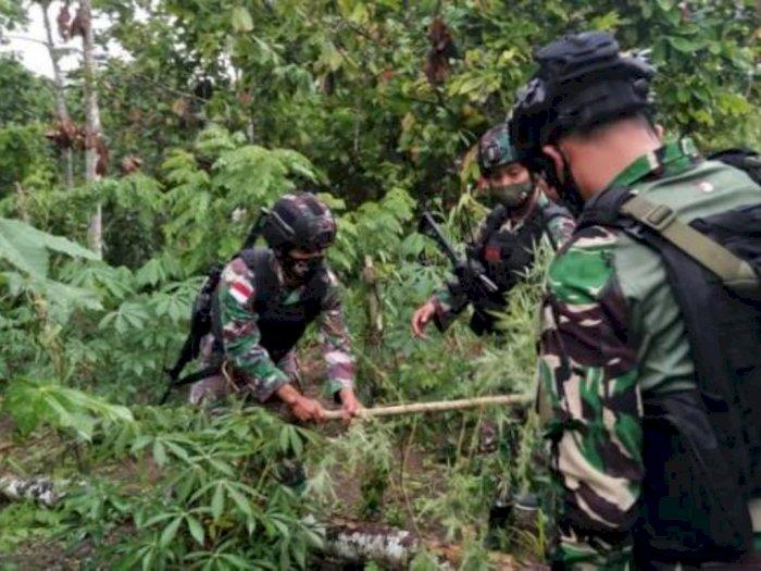 Salut, Warga di Perbatasan RI-PNG Serahkan 36 Batang Ganja kepada Satgas Raider
