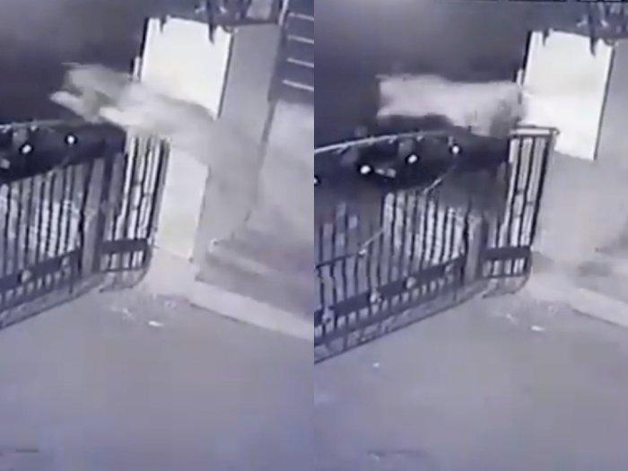Video Saat Macan Tutul Lompat Pagar yang Tinggi Saat Kejar Mangsa, Bikin Netizen Terpukau