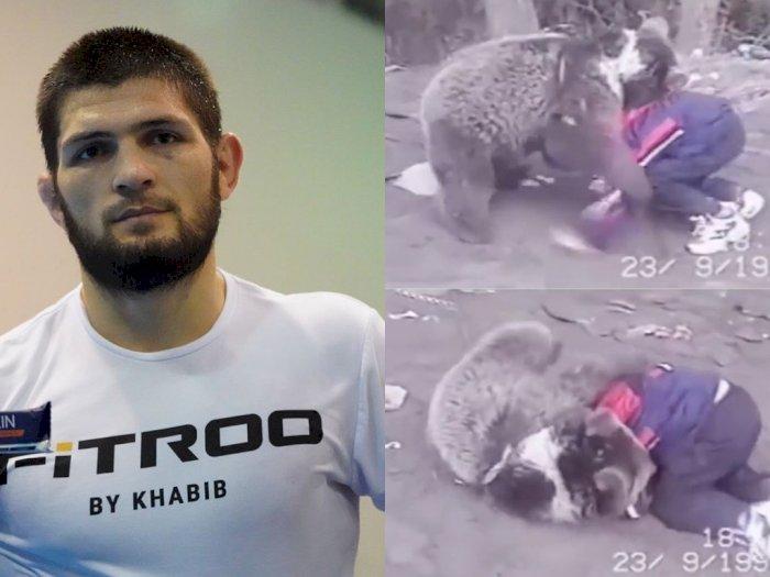 Viral Video Khabib Nurmagomedov Kecil Latihan Lawan Beruang, Netizen Tercengang