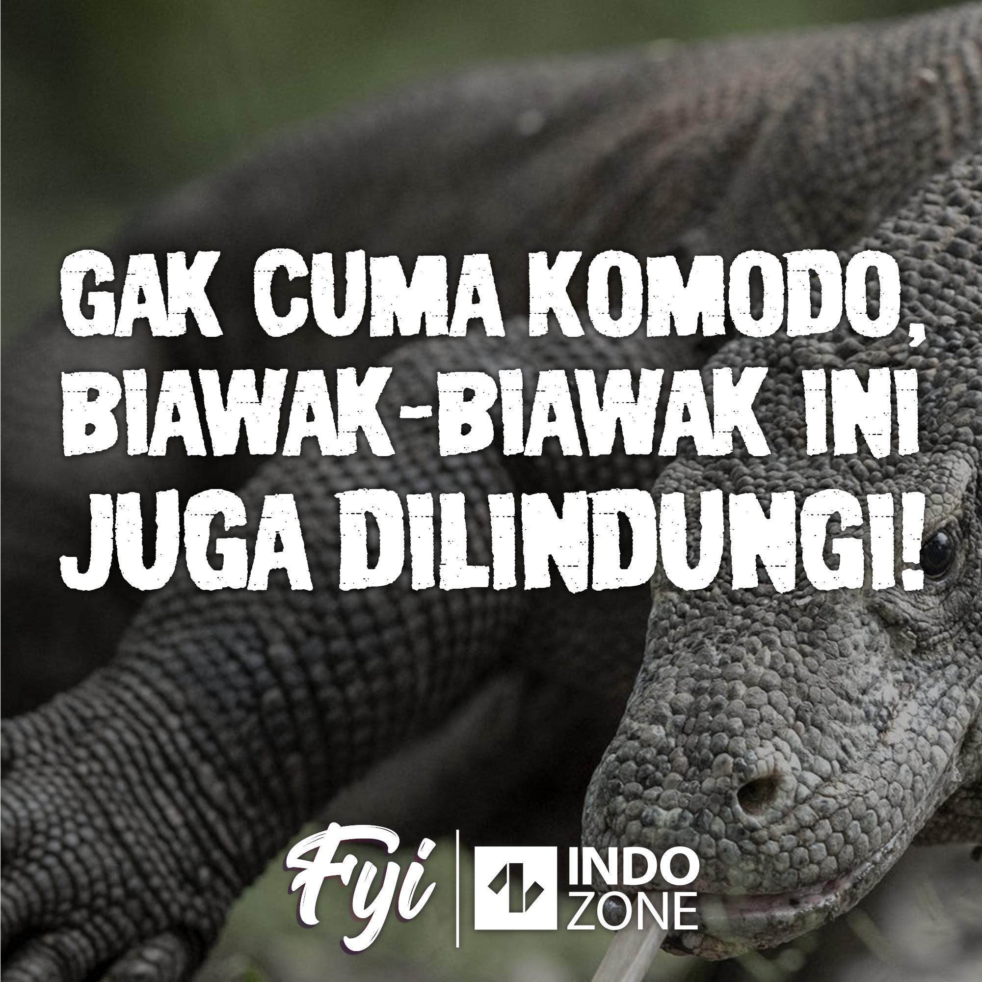 Gak Cuma Komodo, Biawak-Biawak Ini Juga Dilindungi!