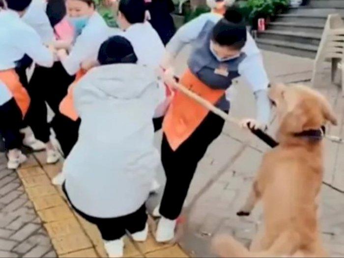 Anjing Ini Bantu Orang Tarik Tambang, Aksinya Bikin Gemas!