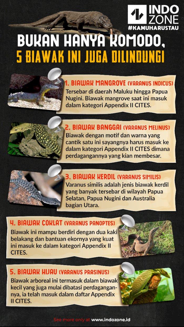 Bukan Hanya Komodo, 5 Biawak Ini Juga Dilindungi