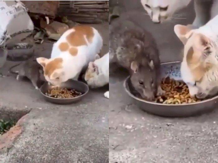 Aksi Santuy Tikus yang Ikut Nimbrung Makan Bareng Kucing, Bikin Netizen Ngakak