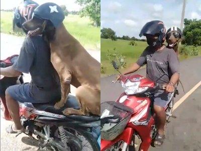 Gemasnya Anjing ini Jalan-jalan dengan Majikannya Naik Motor, Pakai Helm dan Kacamata