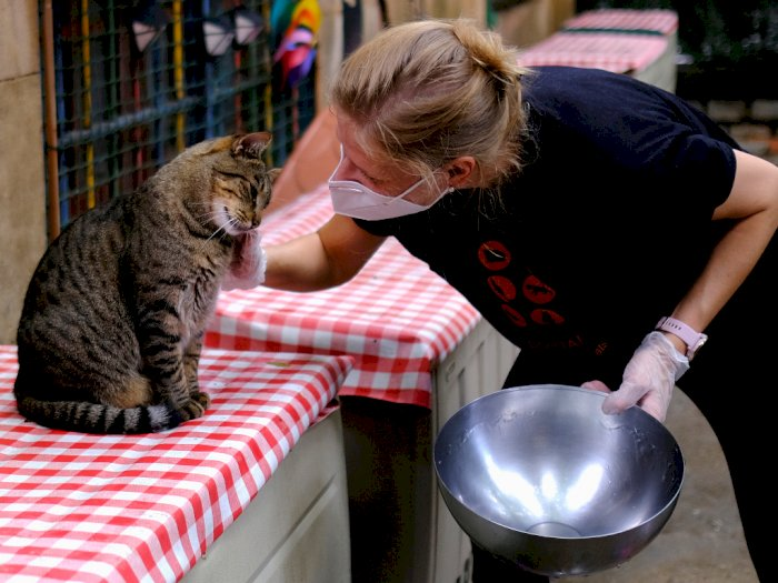 FOTO: Penampungan Kucing Terlantar Akibat COVID-19 di Barcelona