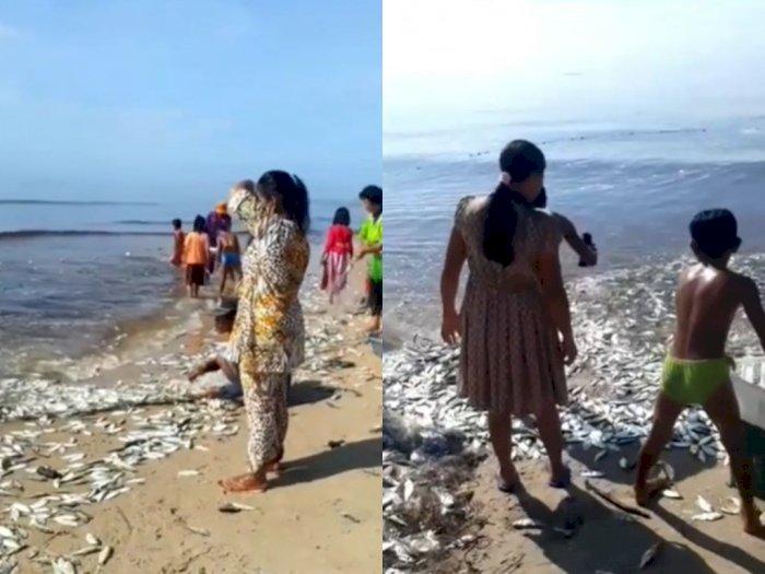 Pantai Ujung Pandaran Kotawaringin Timur Dipenuhi Ribuan Ikan Bukan karena Fenomena Alam
