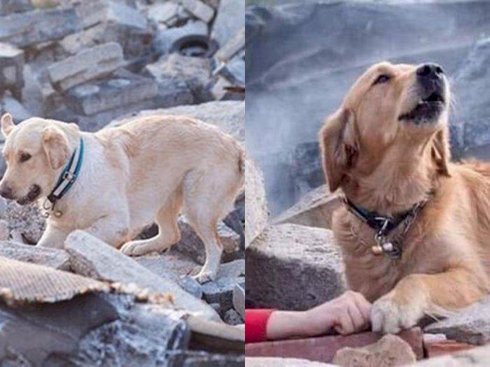 Potret Sedih Anjing di Turki yang Setia Tunggu Pemiliknya di Balik Reruntuhan saat Gempa
