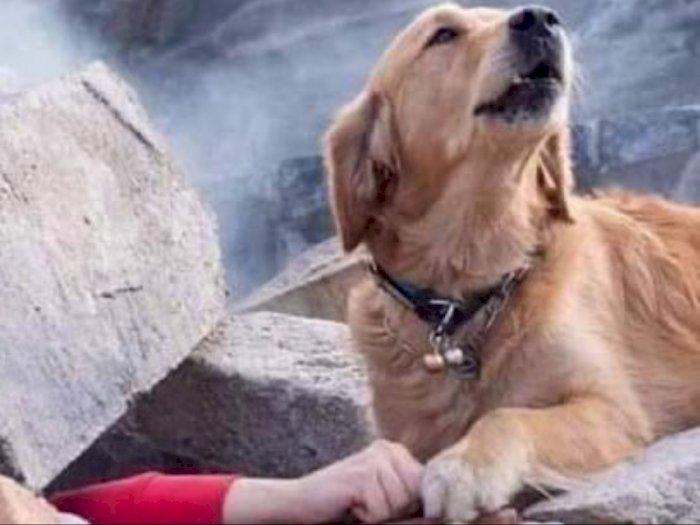 CEK FAKTA: Anjing di Turki yang Setia Tunggu Majikannya di Balik Reruntuhan usai Gempa