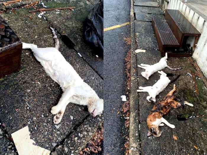 Sedih! Kucing Jalanan Ini Ditembak Mati, Pecinta Hewan Minta Pelakunya Diadili