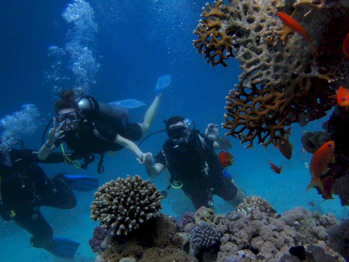 Merugi Hingga Rp75 M, Industri Wisata Selam Siap Terima Wisatawan