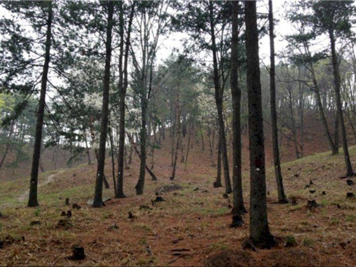 Praktik Pemakaman Korea, dari Kremasi Hingga Penguburan di Sekitar Pohon
