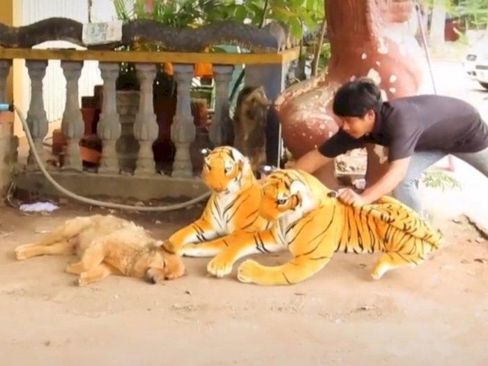 Prank Anjing Yang Sedang Tidur Dengan Boneka Harimau, Netizen: Bengek