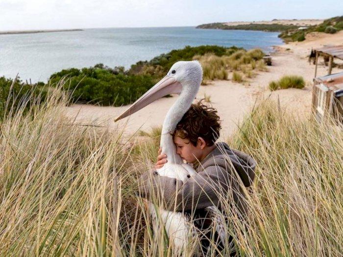 Sinopsis 'Storm Boy (2019)' - Kisah Persahabatan Anak Laki-laki dan Burung Pelikan