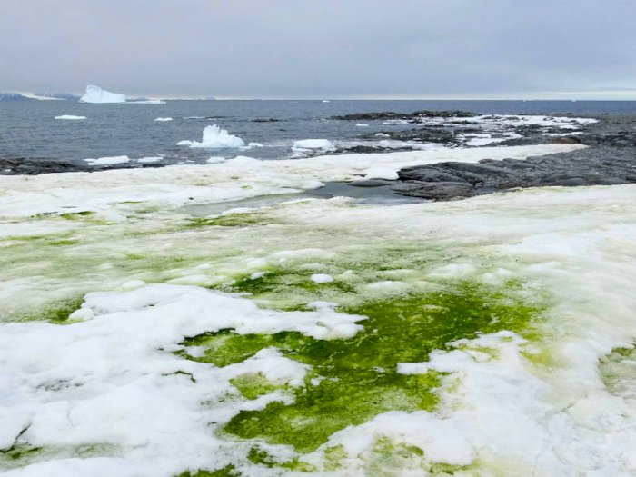 Saat Salju Antartika Berubah Menjadi Hijau, Ini Sebabnya