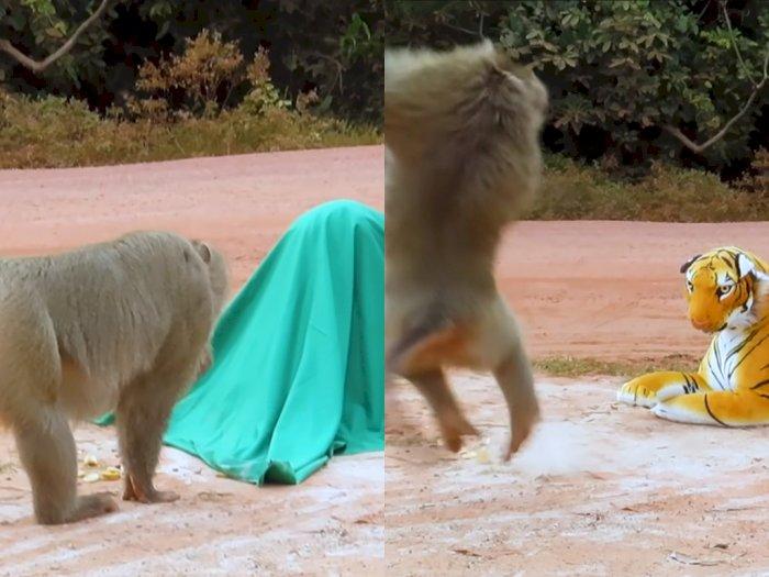 Pria ini Bikin Prank Kepada Monyet dan Anjing Gunakan Boneka Harimau, Bikin Netizen Ngakak