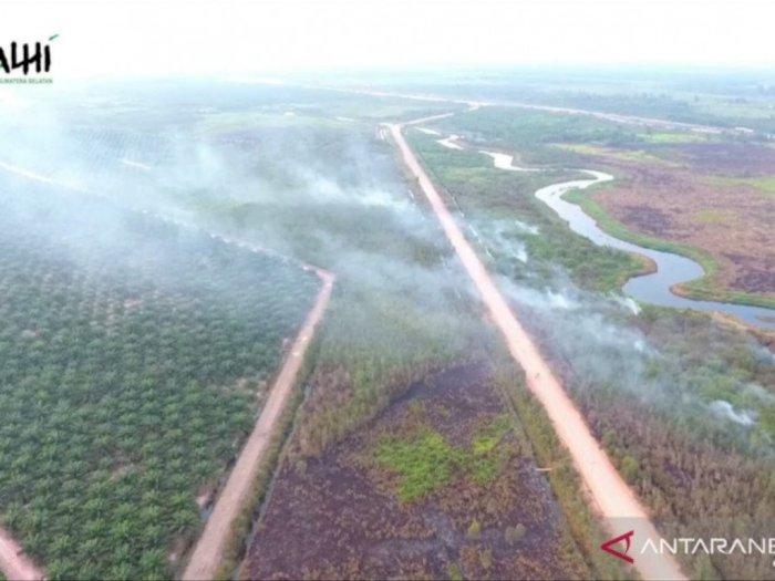 Heboh Video Kebakaran Hutan Papua untuk Lahan Sawit, Guru Besar IPB Angkat Bicara