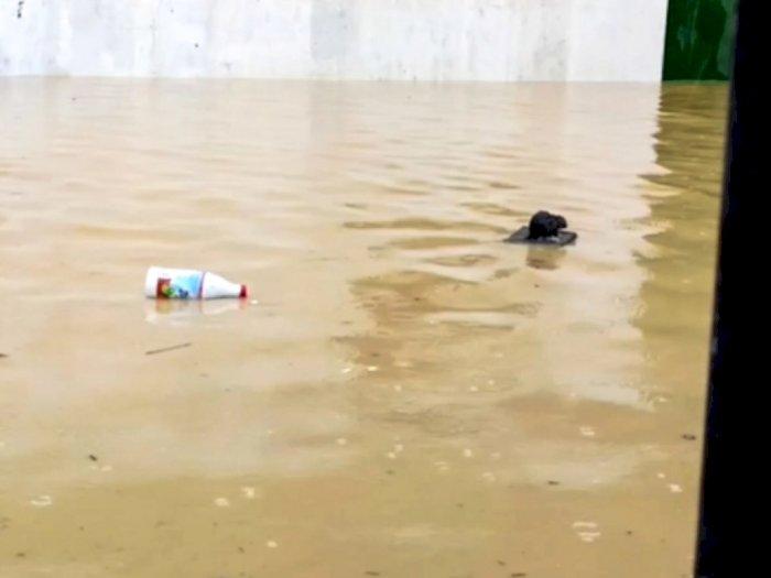 Viral Video Tikus Selamatkan Diri di Tengah Banjir, Papan Dijadikan Sampan