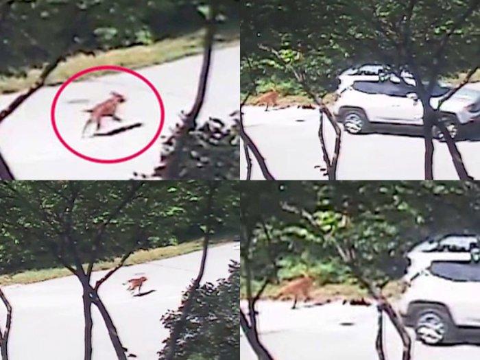 Sedih! Anjing Ini Rela Mati-matian Kejar Mobil Pemiliknya setelah Sadar Dirinya Dibuang