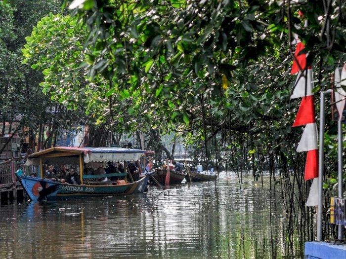 FOTO: Wisata Hutan Mangrove Sungai Jingkem