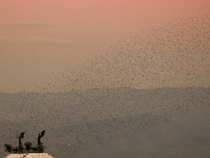 FOTO: Burung Jalak Memenuhi Langit Roma