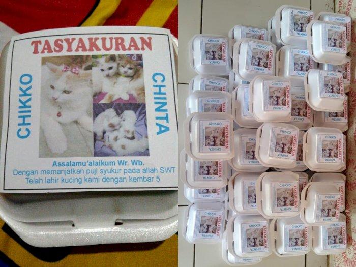 Kucing Lahiran Dibuatkan Tasyakuran, Netizen Dibuat Salfok