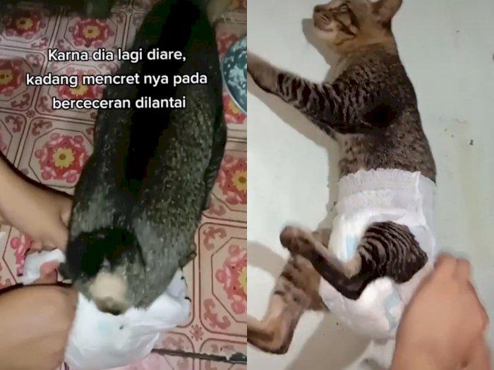 Kucing ini Dipakaikan Pembalut Gegara Diare, Netizen Salfok dengan Cara Jalannya