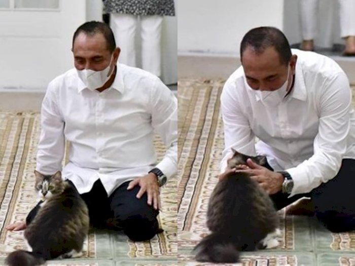 Perkenalkan, Ini Young Er, Kucing Manja Kesayangan Gubernur Edy Rahmayadi yang Bikin Gemes