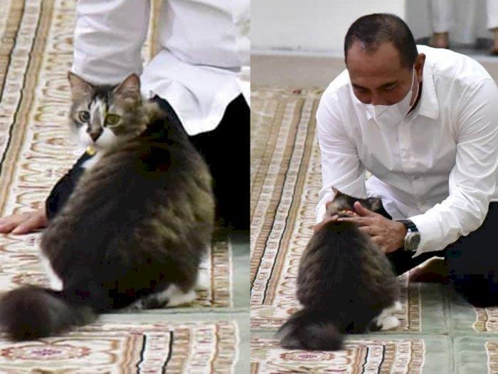 Melihat Young Er, Kucing Kesayangan Keluarga Gubernur Edy yang Manja